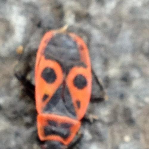 Flea: Prechádzam sa po Prahe a stretol som hmyz, ktorý vyzerá ako africká maska